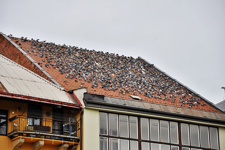 A2B Pest Control are able to install spikes to deter birds from roofs in Harrow.