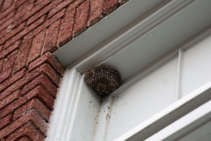 We provide a wasp nest removal service for domestic and commercial properties in Harrow.